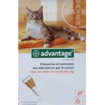 Advantage 40 Chat de 1 à 4kg - 6 Pipettes